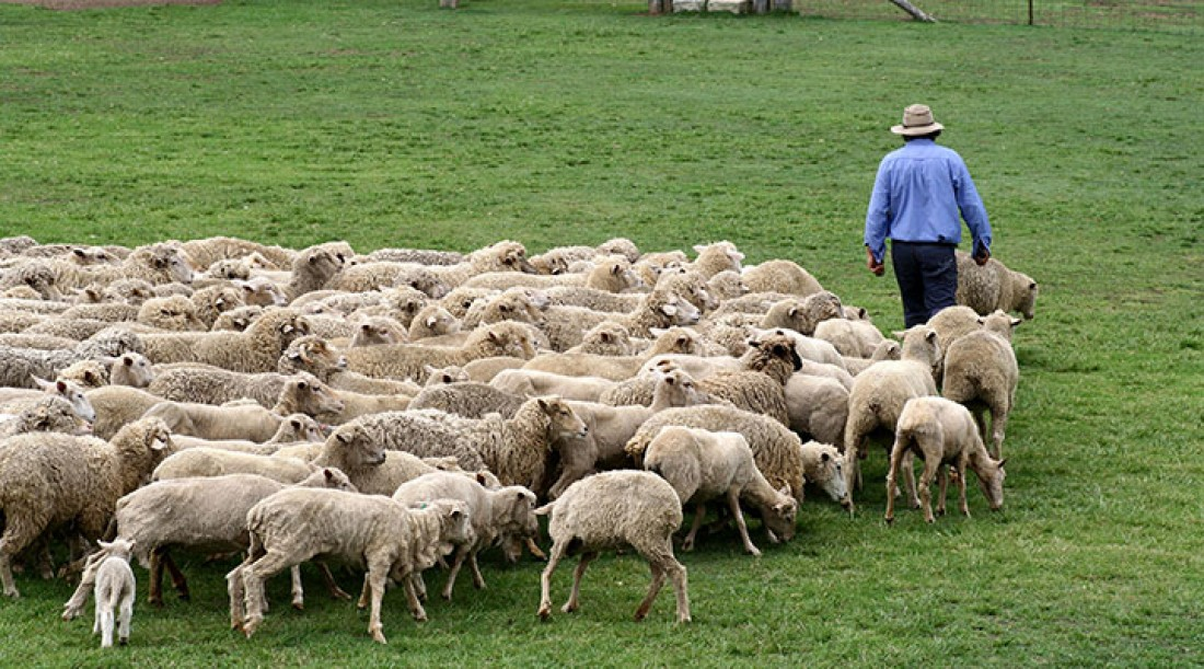 How to Love Your Shepherds