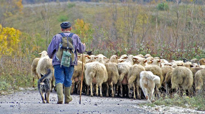 Everybody Love a Shepherd Challenge