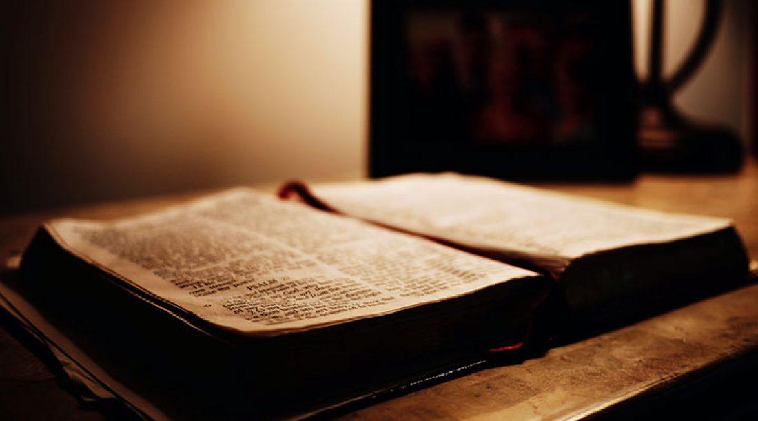 Everybody Love a Shepherd Testimonials