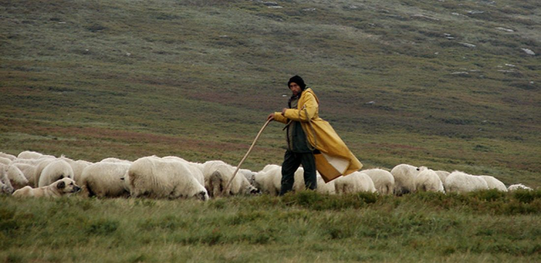 Shepherd's Creed: Feed, Bleed and Lead